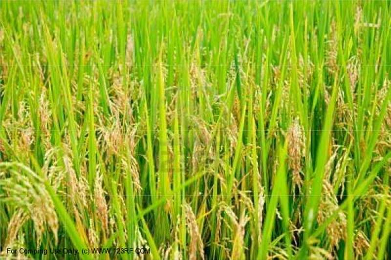 品牌農業:苑裡栽稻-山水米品牌行銷之道