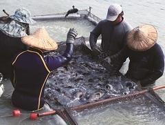 陳李農改研究團隊執行長李武忠》揮別石斑魚寒冬 4招燒旺產業