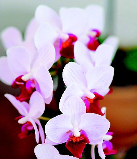 台灣花卉外銷保衛戰台灣花卉外銷保衛戰 從商品轉型花藝生活提案優質品牌
