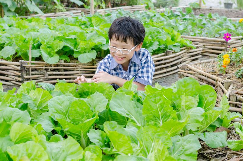 食農教育推廣活動輔導分析