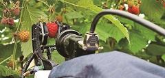 番茄、草莓、覆盆子都難不了它》採收機器人摘出智慧農業新里程碑