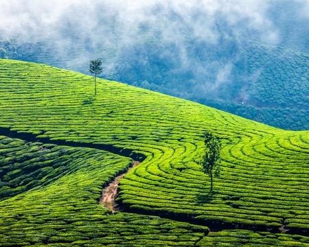 氣候變遷,前進印度,台灣優勢綠色科技好時機!