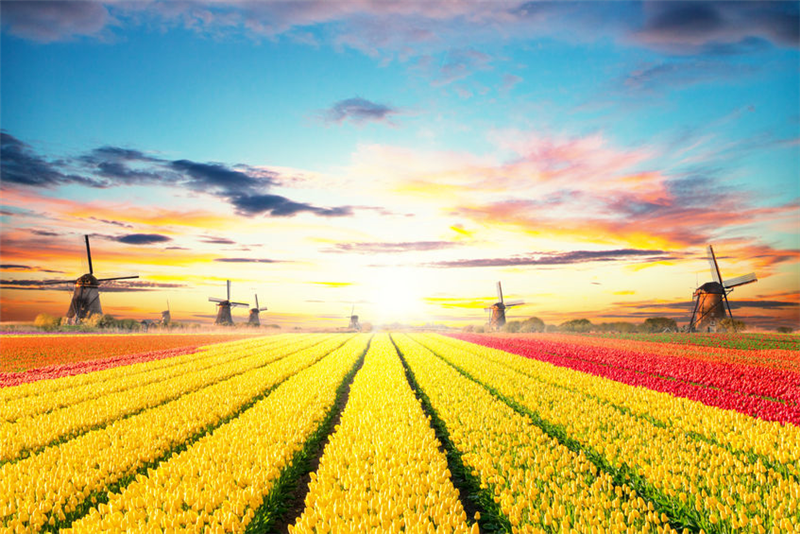 淺談荷蘭農業發展