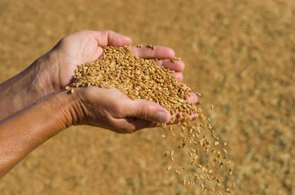 深耕專業農作  下個十年主流